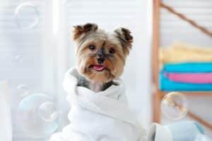 Pet Grooming Bookkeeping